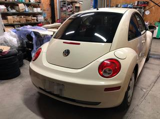 Beetle002.jpg